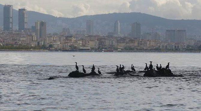 İstanbul'un bilinmeyen kayıp adası