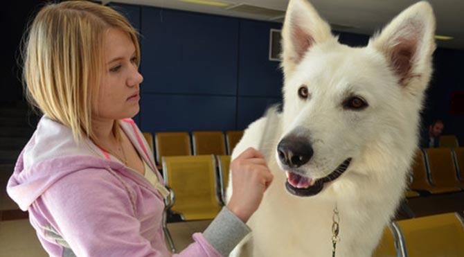 Uluslararası Bakü Köpek Festivali sona erdi