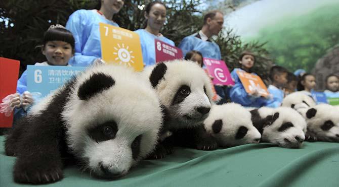 'Panda anaokulu' açıldı
