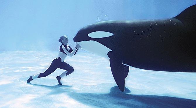 Katil balina gösterileri nihayet sona eriyor