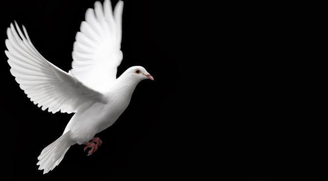 Kanserde 'Güvercin' mucizesi