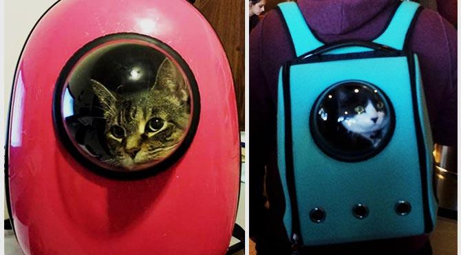 Astronot kediler geliyor