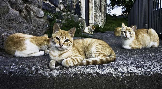 720 bin liralık evini sokak kedilerine miras bıraktı