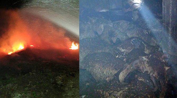 161 hayvan yanarak telef oldu!