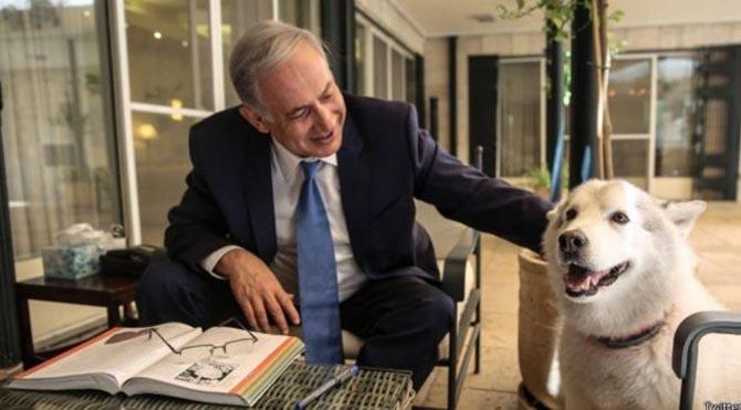 Netanyahu'nun köpeği konuklara saldırdı!