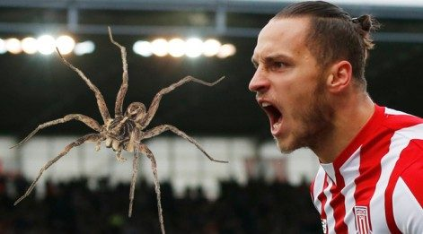 Stoke'ta örümcek paniği