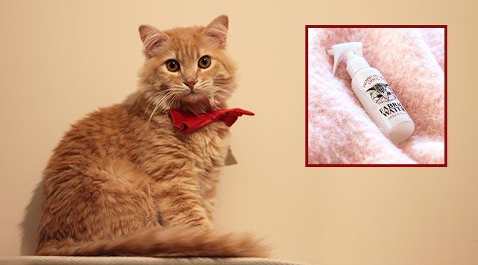 Kedi gibi kokmak isteyenlere müjde!