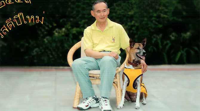 Kral'ın köpeğine hakaret etti, 37 yıl hapsi isteniyor