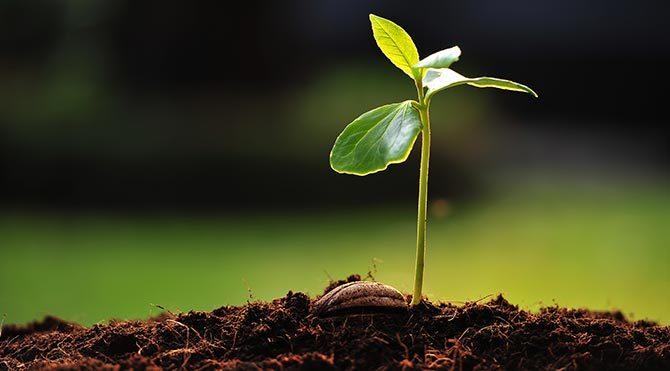 Bitkiler toprak aracılığıyla iletişim kuruyor