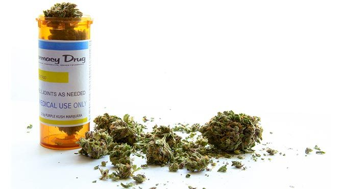 Obezite savaşında yeni çözüm: Marihuana