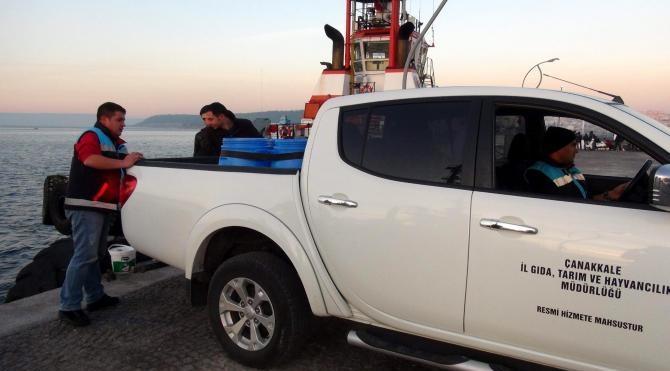 Çanakkale`de kaçak toplanan 200 kilo deniz patlıcanı ele geçirildi