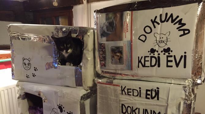 Amasya´da kedi evleri yapıldı