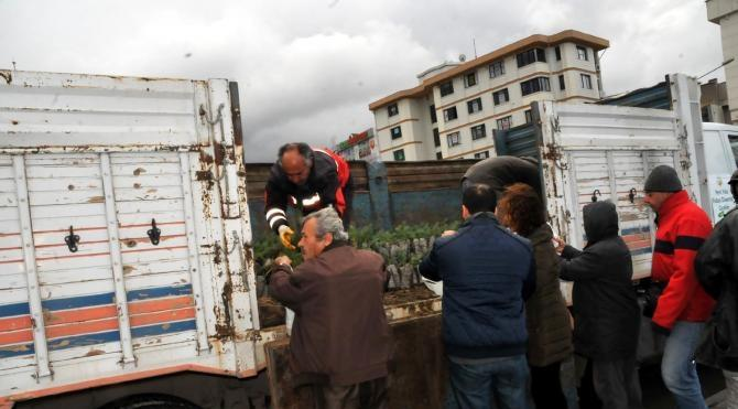 Yalova´da yılbaşı öncesi 8 bin fıstık çamı dağıtıldı