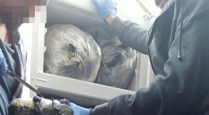 Buzdolabı ve derin dondurucuda 80 kilo esrar yakalandı