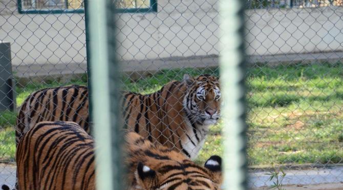 Hayvanat Bahçesi sakinlerine yılbaşı yiyeceği