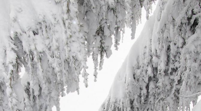 Ordu´da kar nedeniyle 16 ilçede okullar tatil edildi