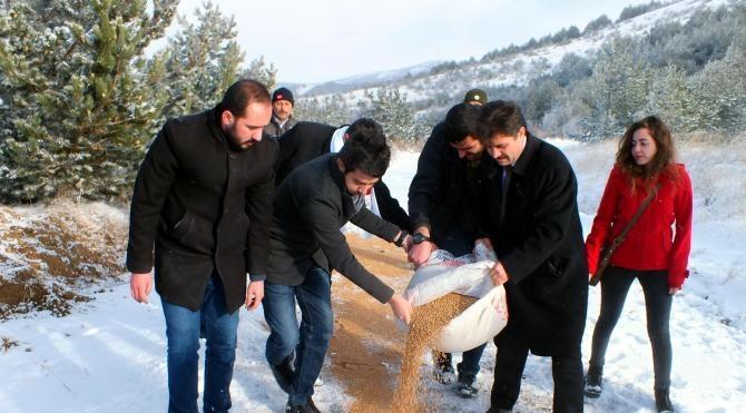 Yozgat`ta kar yağışının ardından doğaya yem bırakıldı