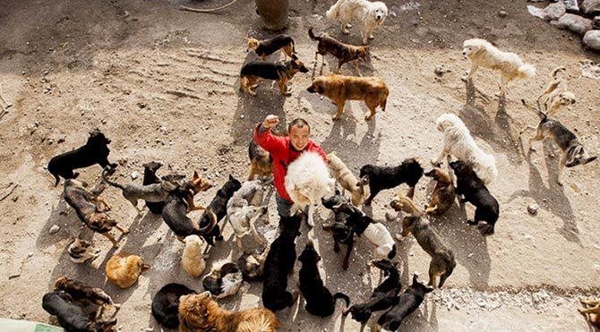 2 bin köpeği kurtarabilmek için iflas etti