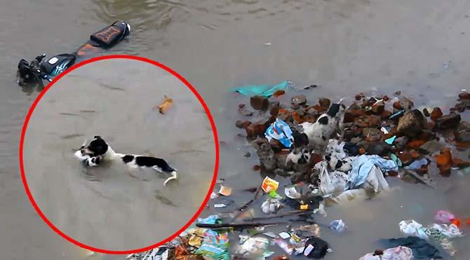 Anne köpek 4 yavrusunu boğulmaktan kurtardı