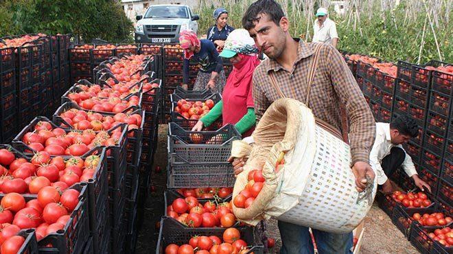 9 milyon ton yaş sebze meyve çöpe gidiyor