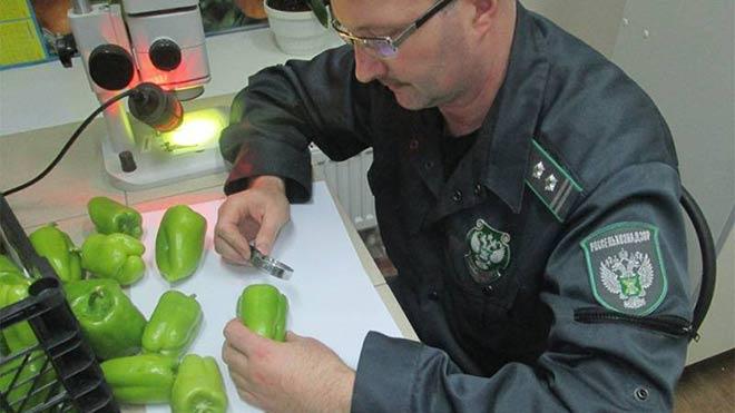 Rusya 9 ton biberi iade etti