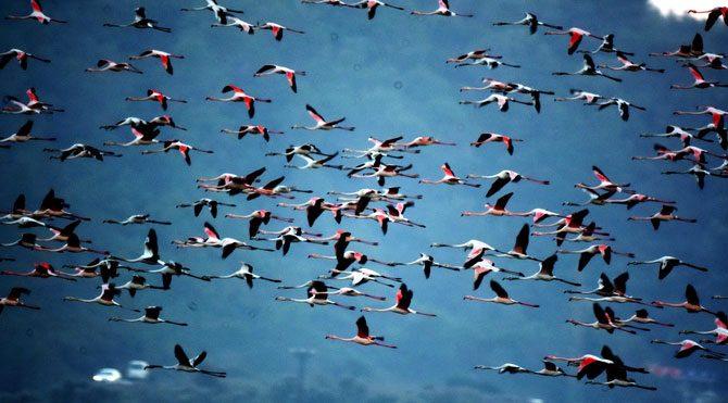 Flamingolardan büyüleyen görüntüler