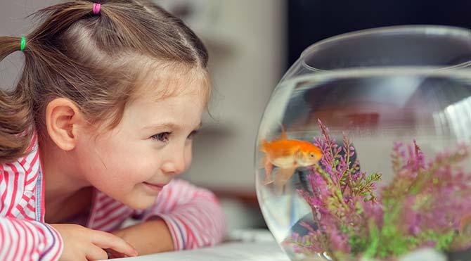 Balıkların duyguları ve bilinci olabileceği keşfedildi