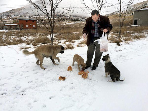 sokak hayvanları soğukta ile ilgili görsel sonucu