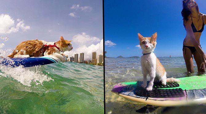 Tek gözlü sörfçü kedi Kuli