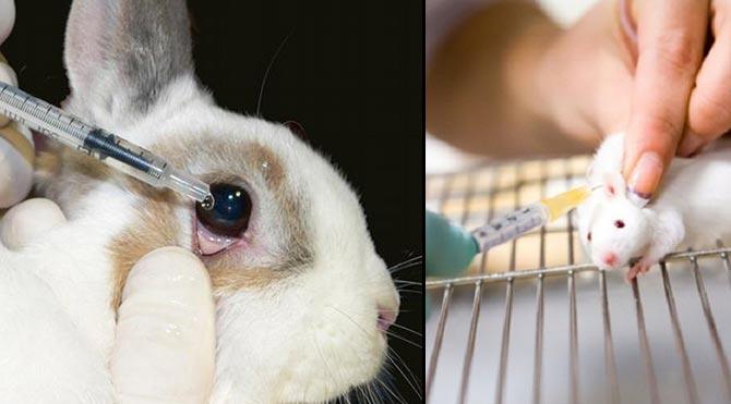 Güney Kore'de hayvanlar üzerinde deney yasaklanıyor