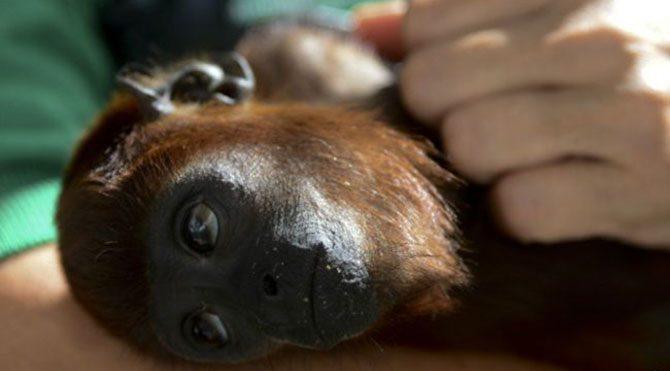 'Maymuna kafa nakli yaptım'