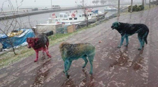 Köpeklere boyalı işkence!