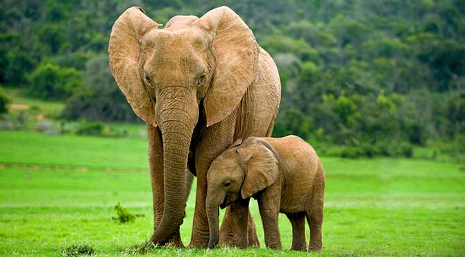 Filler kanser olmuyor