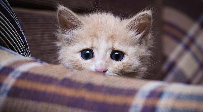 İngiltere 'seri kedi katilini' arıyor
