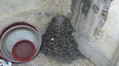Mide bulandıran midye operasyonu