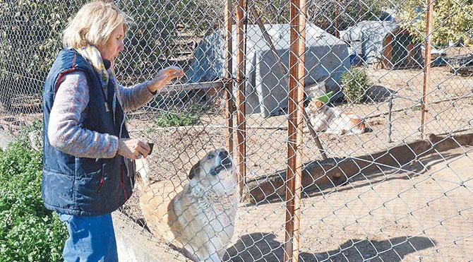 Bakımevinde iki veteriner, bir tekniker ve yedi temizlik görevlisi görev yapıyor.