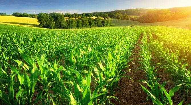 Toprak elementi; Kendini topraklama, doğa ile iç içe, toprak işleri ile ilgilenme, doğayla-toprakla iç içe olma.