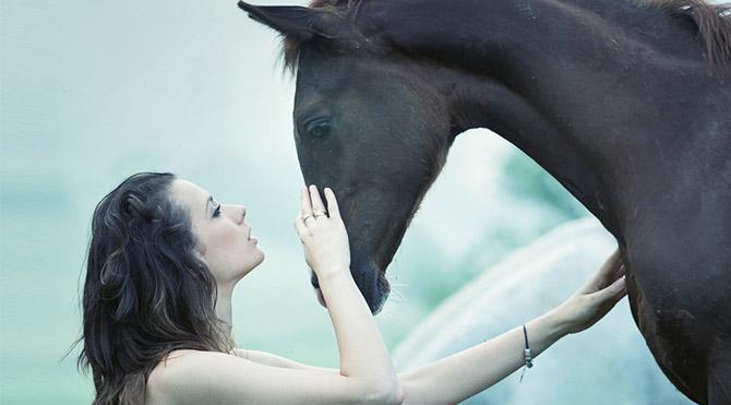 Atlar insanları anlayabiliyor