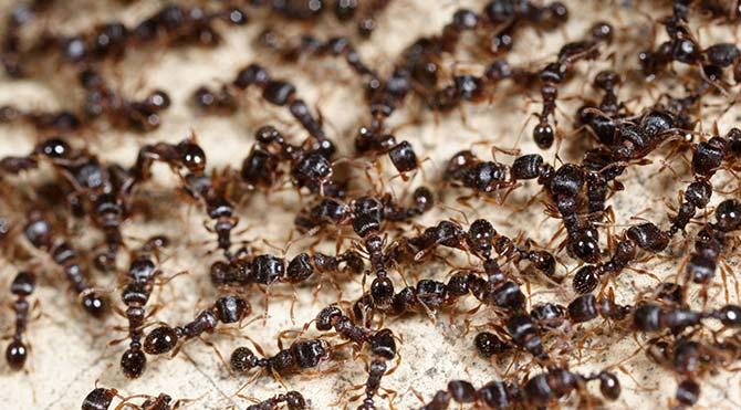 karınca site:sozcu.com.tr ile ilgili görsel sonucu
