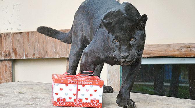 Hayvanlara böyle hediye verilir mi?