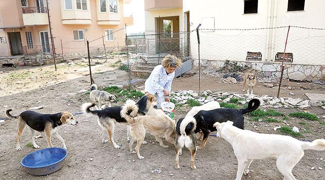 40 köpeği için villa kiraladı
