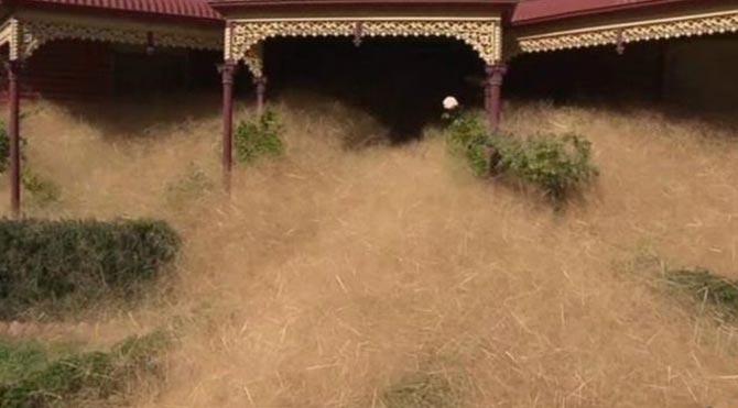 Avustralya'da kuru ot istilası
