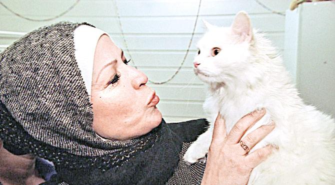 Midilli'de kaybettiği kedisine Norveç'te kavuştu