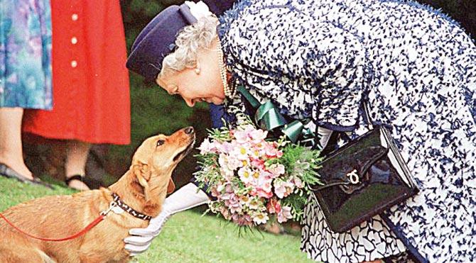 Kraliçe'nin şanslı köpekleri