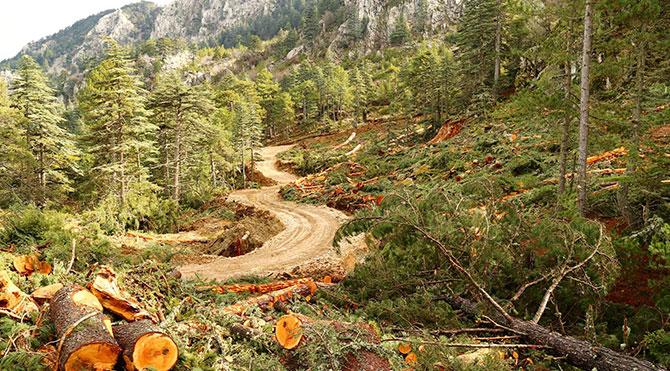 Mermer ocağı bir yılda ormanı yok etti
