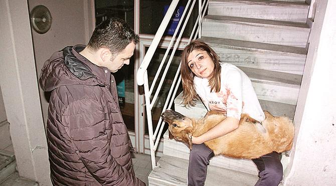 Genç kadın, veteriner acı çeken hayvana müdahale ederken başında durup köpeği sakinleştirmeye çalıştı.