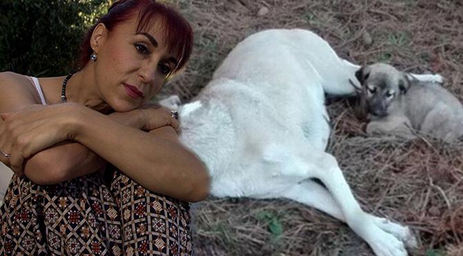 Leman Sam'dan köpeğe tecavüz edenlere tepki