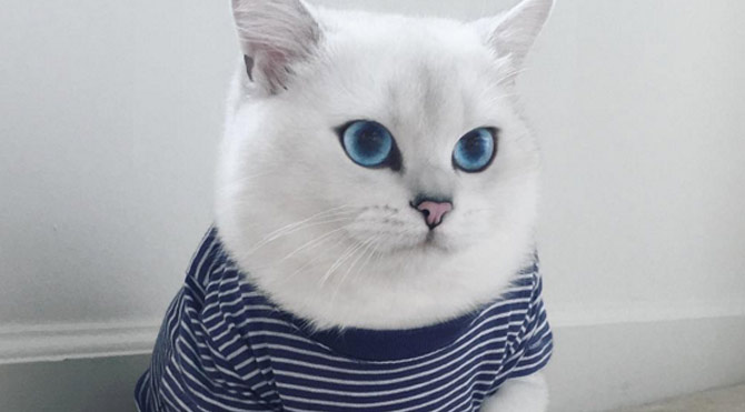 Gözleriyle büyüleyen kedi
