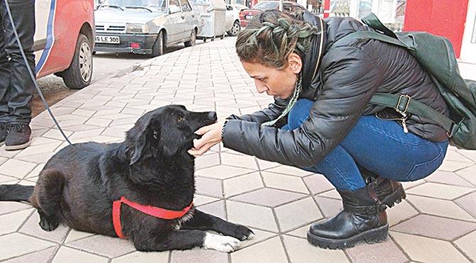 Sokak köpeğine Green Card!