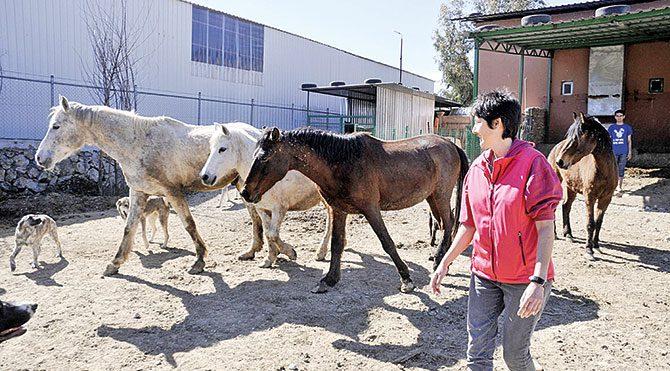Evini satıp hayvanlar için çiftlik kurdu